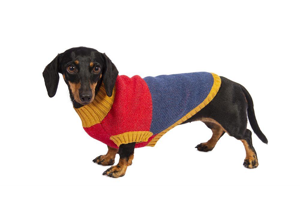 Si tú no lo usarías, ¿por qué tu perro perro si? Frenchie, Pug o Poodle; en Hot Dogz, creemos que todos los perros merecen presumir de su estilo. Por eso trabajamos diseños que se amoldan a los gustos de su humano y a la comodidad y confort del peludo de casa. Una línea sofisticada diseñada para tu perro pensando en ti! Nuestras chompas se tejen cuidadosamente para brindar comodidad, resistencia, durabilidad y mucho estilo. Cali usa talla Small En esta misma página, más abajo, encontrarás la<strong>GUÍA DE MEDIDAS</strong> específica de este suéter para que elijas correctamente la talla de tu perro. <strong>¡Toma en cuenta que no todas las prendas siguen la misma tabla de medidas! Dentro de cada producto, encontrarás la tabla de medidas que corresponde al modelo.</strong>