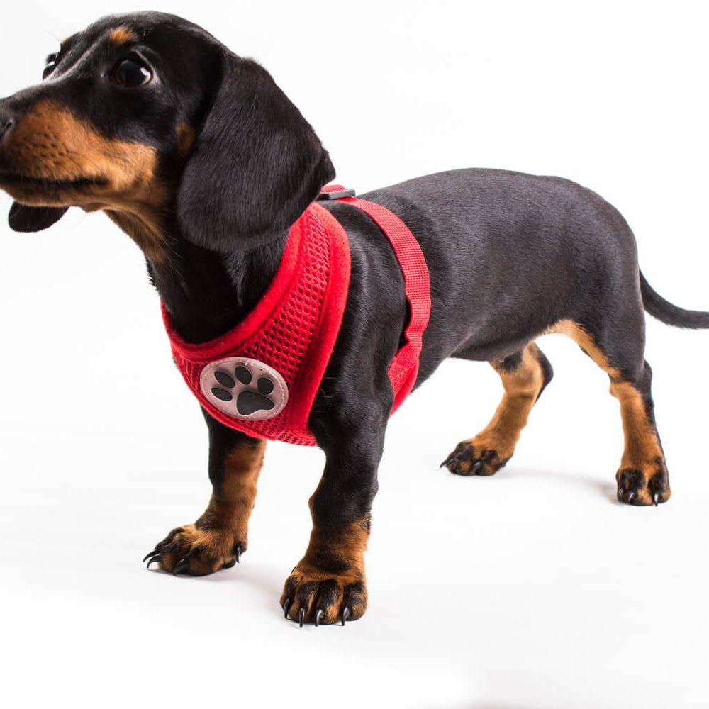 ¿No te gustaría que tu engreído sea único dentro de su mancha? Nuestros collares y dijes son perfectos para tu mascota, se pueden armar de manera personalizada. Tenemos opciones muy entretenidas que harán que tu canino brille. Ancho del collar 1 centímetro.
