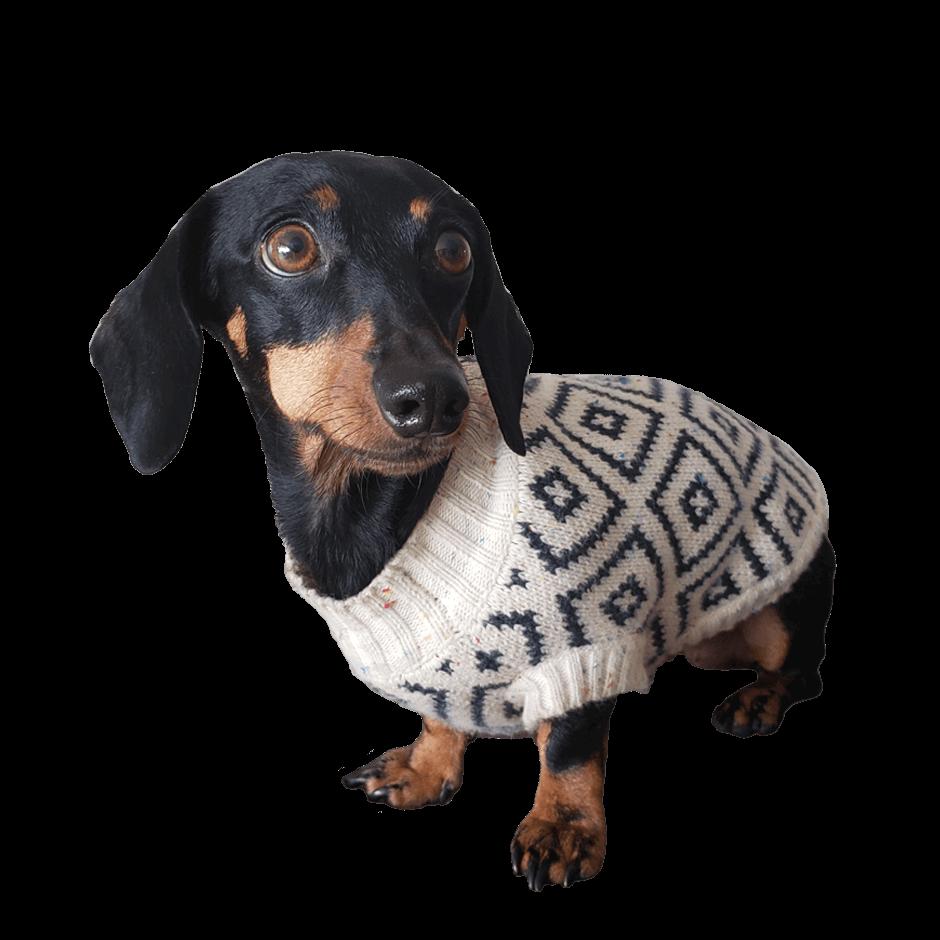 Sweaters Se amoldan bien al cuerpo del perro. Si tu perro es de esos que son más tacuchi, tomar en cuenta que el tejido no es 100% stretch. Gloria usa talla Small En esta misma página, más abajo, encontrarás la<strong>GUÍA DE MEDIDAS</strong> específica de este suéter para que elijas correctamente la talla de tu perro. <strong>¡Toma en cuenta que no todas las prendas siguen la misma tabla de medidas! Dentro de cada producto, encontrarás la tabla de medidas que corresponde al modelo.</strong>