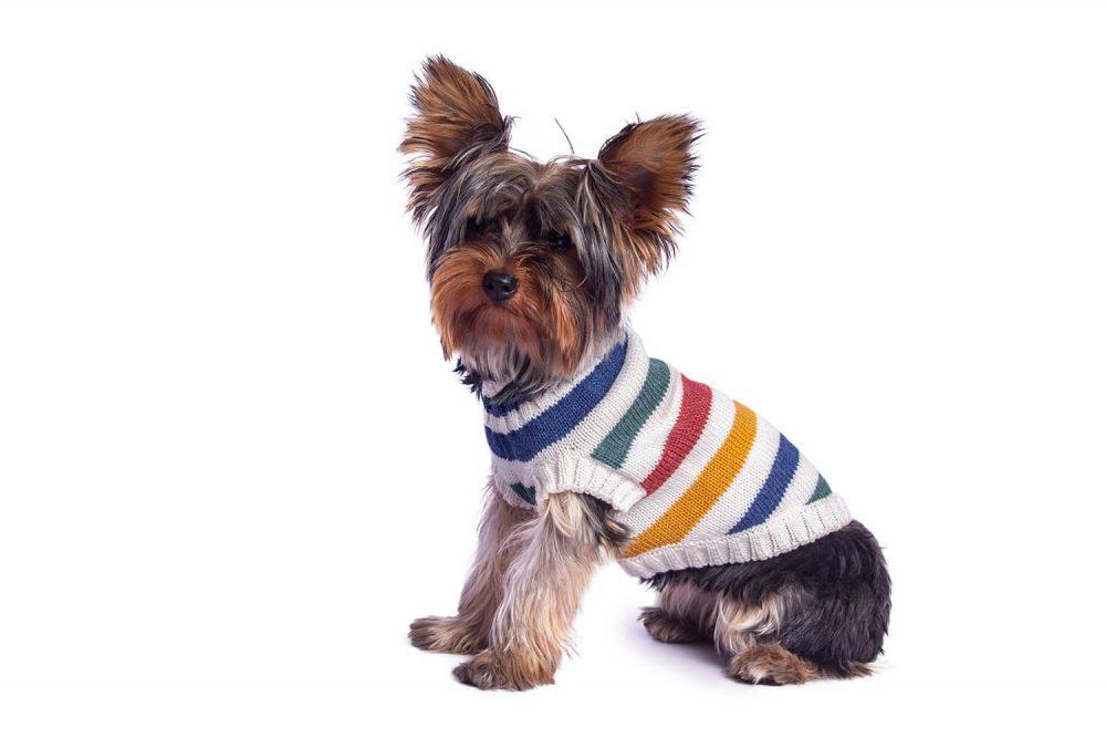 """Sweaters Se amoldan bien al cuerpo del perro Kira usa talla Small <span style=""""color: #ff0000;"""">*Para este modelo la raya de color azul acero se ha remplazado por azul marino.</span> En esta misma página, más abajo, encontrarás la<strong>GUÍA DE MEDIDAS</strong> específica de este suéter para que elijas correctamente la talla de tu perro. <strong>¡Toma en cuenta que no todas las prendas siguen la misma tabla de medidas! Dentro de cada producto, encontrarás la tabla de medidas que corresponde al modelo.</strong>"""
