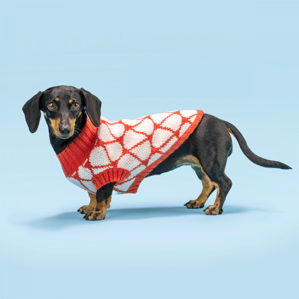¡Ponle color al invierno! <ul> <li>Extra abrigadora</li> <li>Suave al tacto</li> <li>Cuello bajo</li> <li>Ultra cómodo</li> </ul> Gloria es una salchicha miniatura y usa talla nuestra chompa para perro Drops XSmall En esta misma página, más abajo, encontrarás la<strong>GUÍA DE MEDIDAS</strong> específica de este suéter para que elijas correctamente la talla de tu perro.