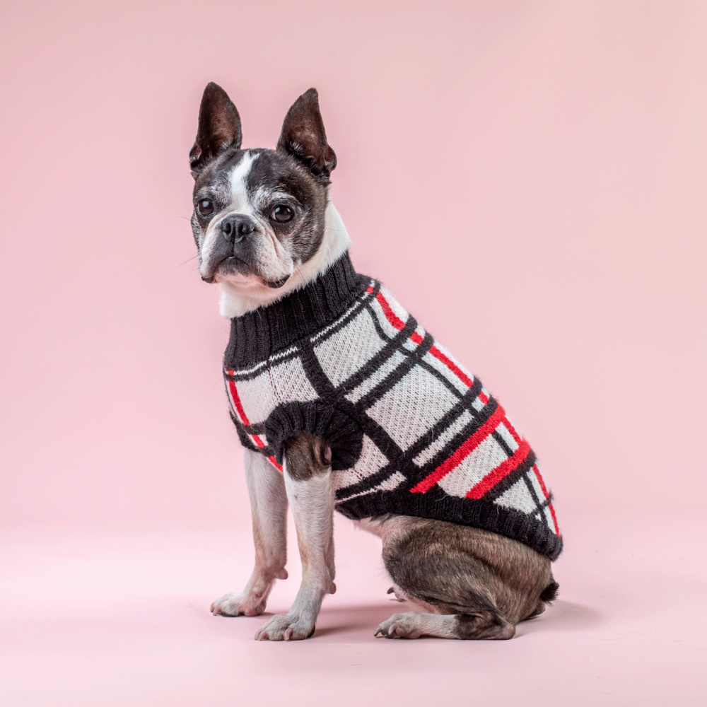 ¡Siempre fashion, nunca infashion! <ul> <li>Extra abrigadora</li> <li>Suave al tacto</li> <li>Cuello bajo</li> <li>Ultra cómodo</li> </ul> Pepper es una Boston Terrier y usa nuestra chompa para perro Escocés talla Small. En esta misma página, más abajo, encontrarás la<strong>GUÍA DE MEDIDAS</strong> específica de este suéter para que elijas correctamente la talla de tu perro.